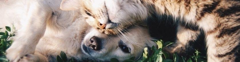 Naminiai gyvūnai ir reikmenys jiems